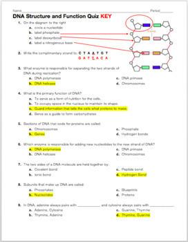 DNA to Proteins Quiz