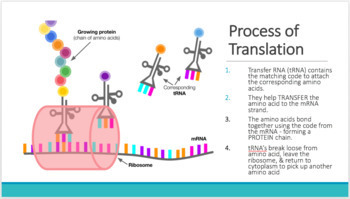 DNA and Protein Synthesis Unit Notes