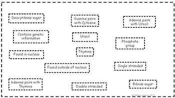 DNA vs RNA Venn Diagram