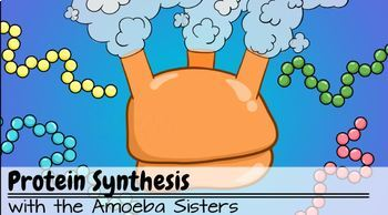 """""""DNA vs RNA and Protein Synthesis"""" Recap Answer KEYS by the Amoeba Sisters"""