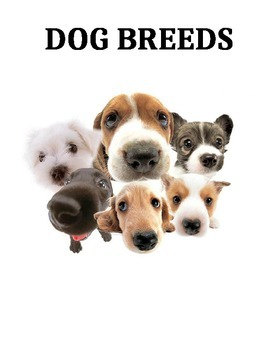 DOG BREEDS WORD SEARCH (GRADES 3 - 6)