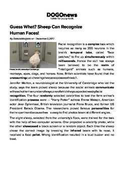 DOGOnews worksheets - Guess What? Sheep Can Recognize Human Faces!