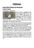 DOGOnews worksheets - Guess What? Sheep Can Recognize Huma