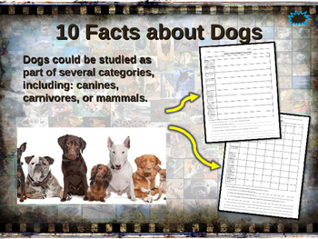 DOGS (DOMESTIC) - visually engaging PPT w facts, video links, handouts & more