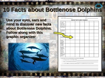 DOLPHINS: 10 facts. Fun, visual, engaging PPT (w links & free graphic organizer)