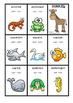 DONKEY CARD GAME - Latin and Greek Roots - 6 games