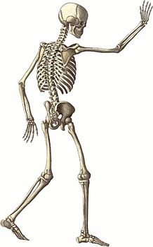 DRAW THE MOST COMMON FRACTURES SCIENCE ANATOMY BIOLOGY NURSING