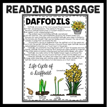 Daffodils Informational Reading Comprehension Worksheet, Spring, Flowers