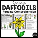 Daffodils Informational Reading Comprehension Worksheet Spring Flowers Daffodil