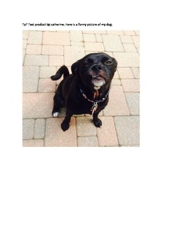 Dailey the Dog