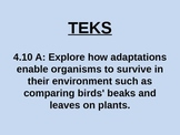 """Daily Quick Checks, """"Adaptations of Animals"""" (Science TEKS 4.10A)"""