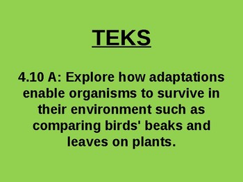 """Daily Quick Checks, """"Adaptations of Plants"""" (Science TEKS 4.10A)"""