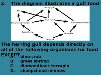 "Daily Quick Checks, ""Food Webs"" (Science TEKS 4.9B)"