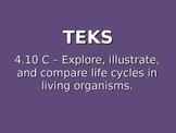 "Daily Quick Checks, ""Life Cycles"" (Science TEKS 4.10C)"