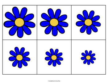 Daisies - From Smallest to Largest