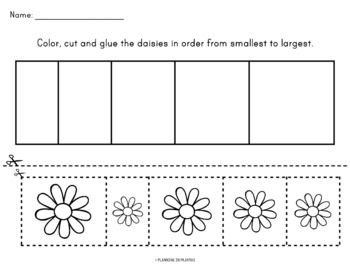 Daisies Size Ordering (From Smallest to Largest)