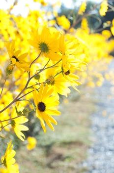 Daisy Flowers Stock Photo Bundle