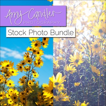 Daisy Flowers Stock Photo Bundle