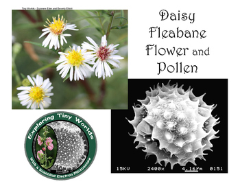 Daisy Fleabane and Pollen with SEM Images
