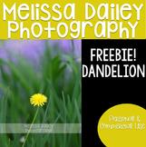 Dandelion Freebie