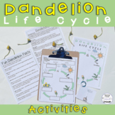 Dandelion Life Cycle Activities