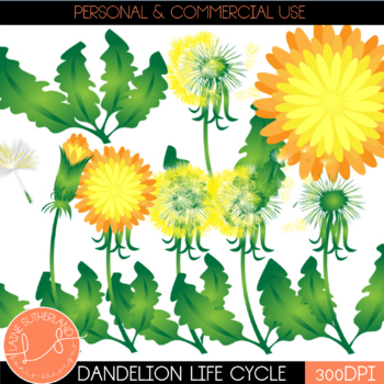 Dandelion Life Cycle Clip Art Set
