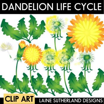 Dandelion Life Cycle Clip Art Set