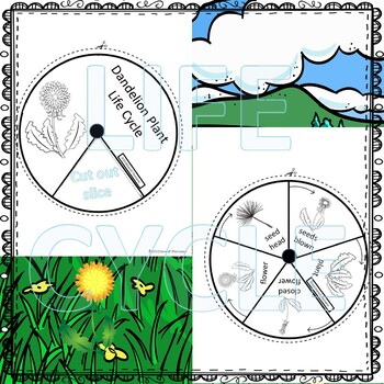 Dandelion (Life Cycle Spinner)