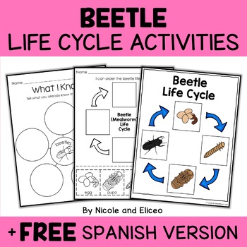 Vocabulary Activity - Mealworm Beetle Life Cycle