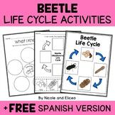 Mealworm Beetle Life Cycle Activities