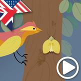 Darwin's Theories Animated Video