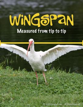 Data: Measuring Height, Wingspan & Footprint