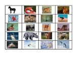 Data Set: Animals Around the World