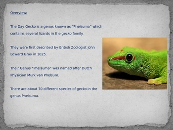 Day Gecko - Power Point - Pictures Facts Information