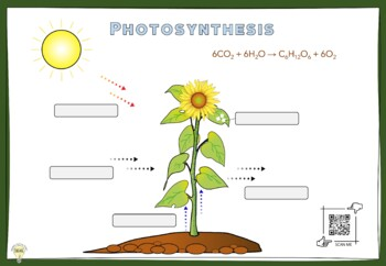 PDF Science Printable Handout Photosynthesis Worksheets and Posters