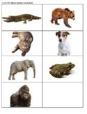 Dayle Music's Musical Alphabet Animal Game