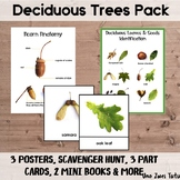 Deciduous Trees Learning Pack Preschool Fall Botany Montes