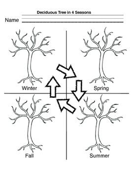 Deciduous Trees in 4 Seasons