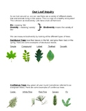 Deciduous and Coniferous Leaf Rubbing Worksheet