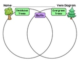 Deciduous or Evergreen - Compare and Contrast Venn Diagram