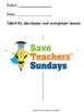 Deciduous or evergreen / coniferous trees and leaves Lesson plan and Worksheets