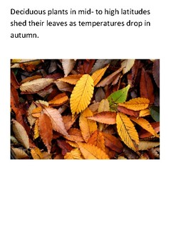 Deciduous woodlands Word Search