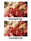 Decodable Reader: Goodnight Dog