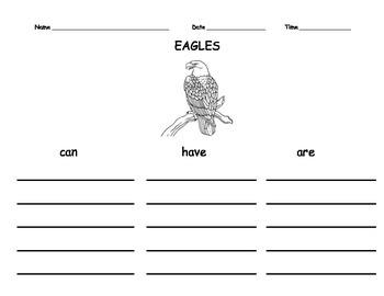 Decorah Eagles Observations