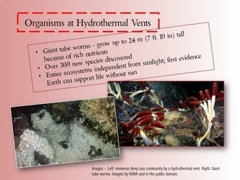 Deep Sea Creature Communities PowerPoint/Slideshow with Study Guide