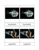 Deep Sea Creatures - Three/Four Part Cards