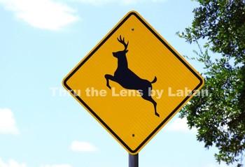 Deer Crossing Sign Stock Photo #174