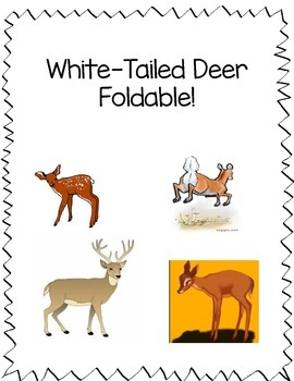 Deer Foldable Second Grade Life Cycles SOL 2.4