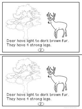 Deer For Primary K-2