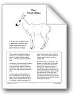 Deer: Forest Athletes